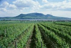 Vinohrady podPálavou